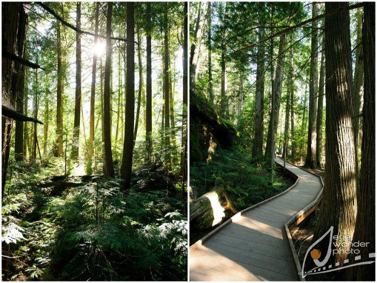Glacier National Park Montana Landscape Photography trail in Forest