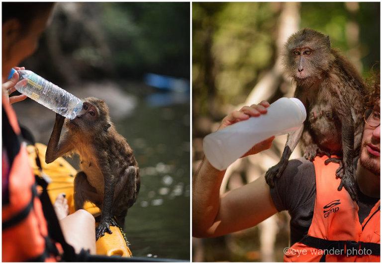 Thailand Kayaking with monkeys