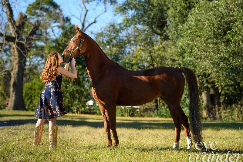 MField_horse_107