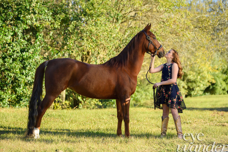 MField_horse_243